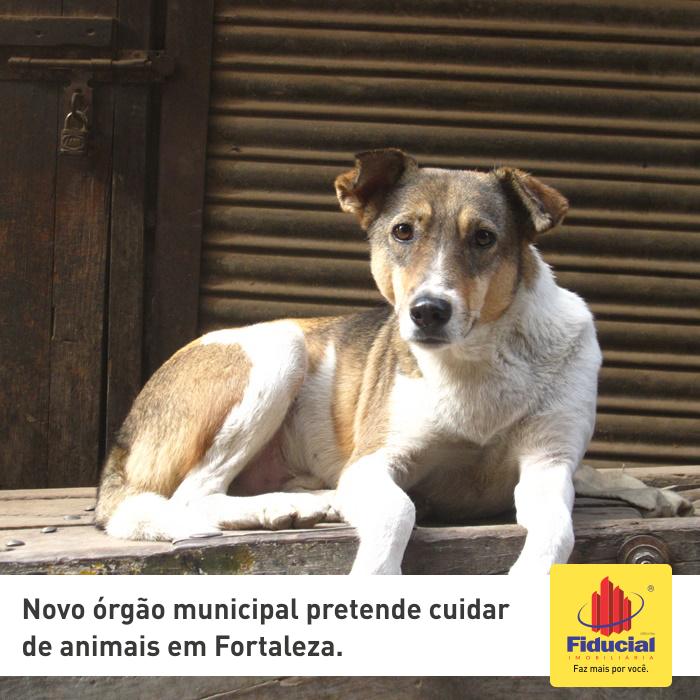 Novo órgão municipal pretende cuidar de animais em Fortaleza